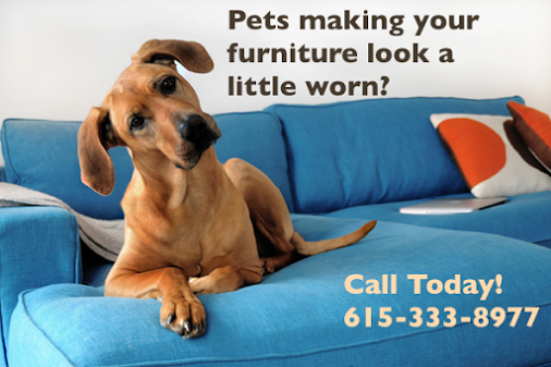 Pet Stain Carpet Cleaning Franklin Tennessee