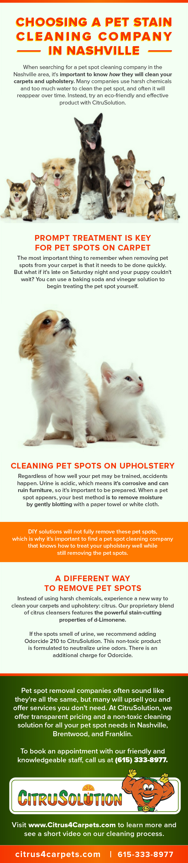 pet-stain-cleaning-company-infographic