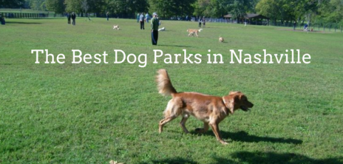 The Best Dog Parks in Nashville
