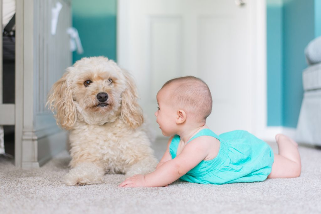 Safe carpet cleaning for kids and dogs