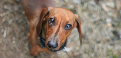 Six Nashville Animal Shelters and Pet Rescue Organizations